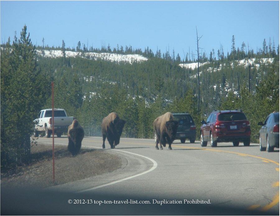 Bison on road in Yellowstone