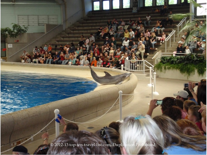 Dolphin show at Brookfield Zoo in Chicago