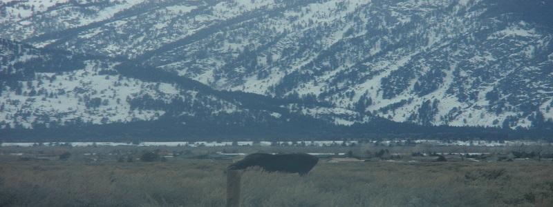 Grand Tetons National Park - moose
