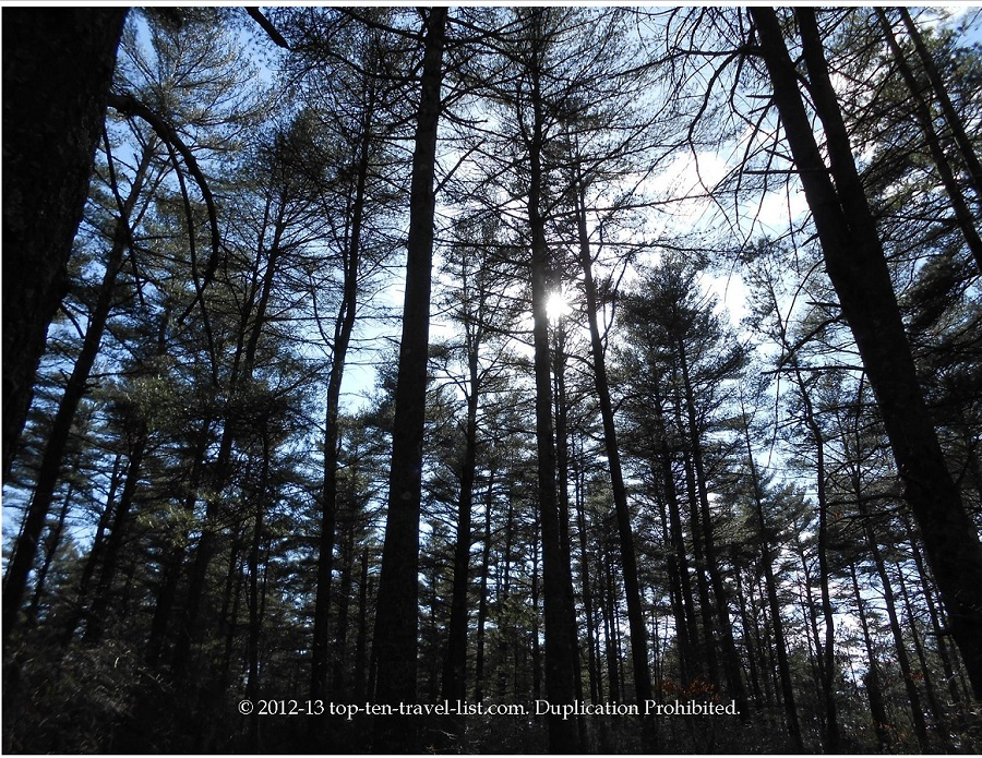 Myles Standish State Park - lots of trees