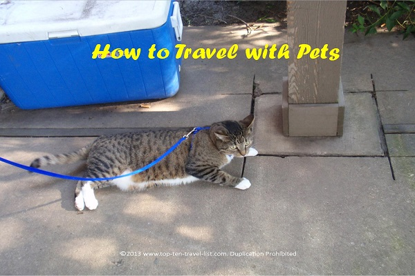 Traveling with pets - Top Ten Travel List