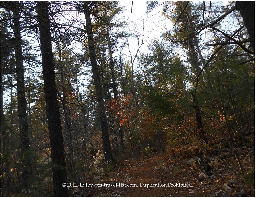 Copicut Woods Fall River - trail view