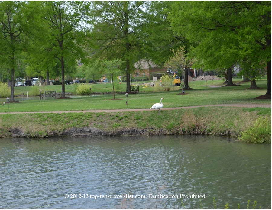 Swan at Founders Inn and Spa - Virginia Beach, VA