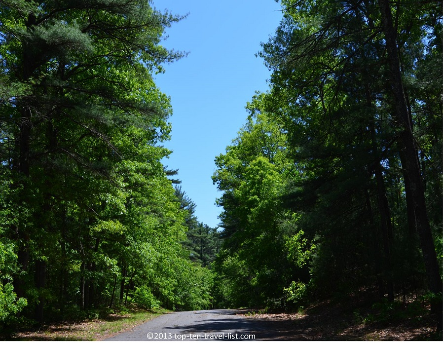 Scenic forest views on the trail at Massasoit State Park in Massachusetts