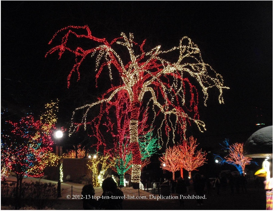 Lincoln Park ZooLights - candy cane lights on tree