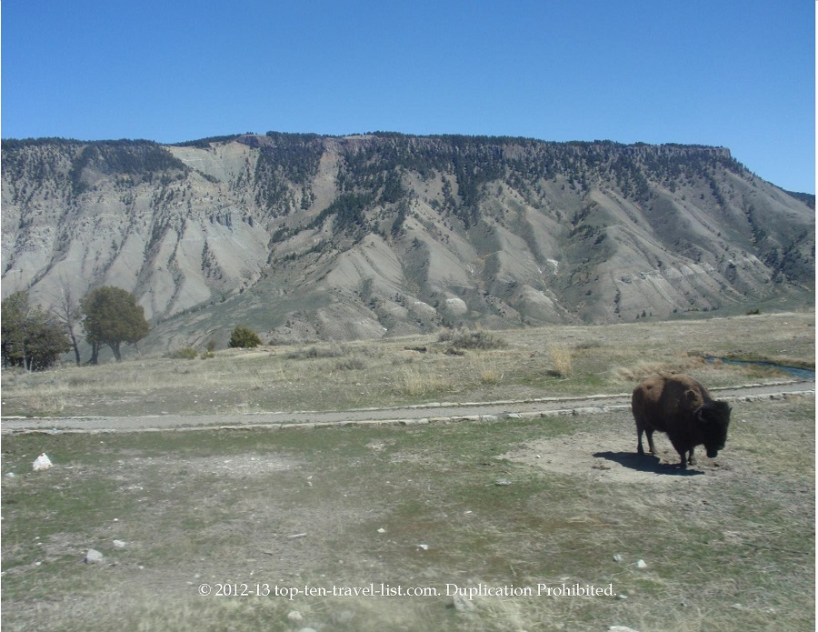 Mountain and wildlife scenery - Yellowstone