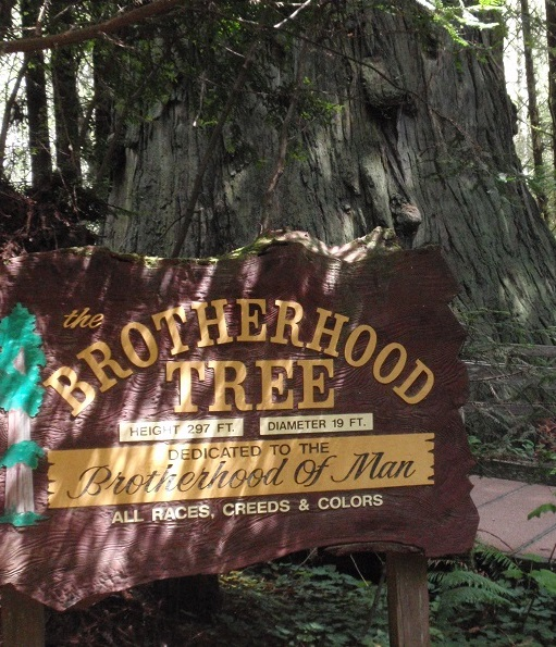 Brotherhood Tree at Trees of Mystery