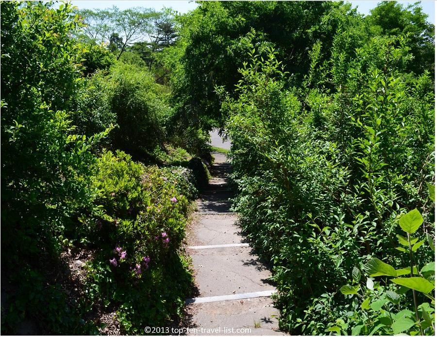 The Arnold Arboretum scenic stairwell - Jamaica Plains, MA