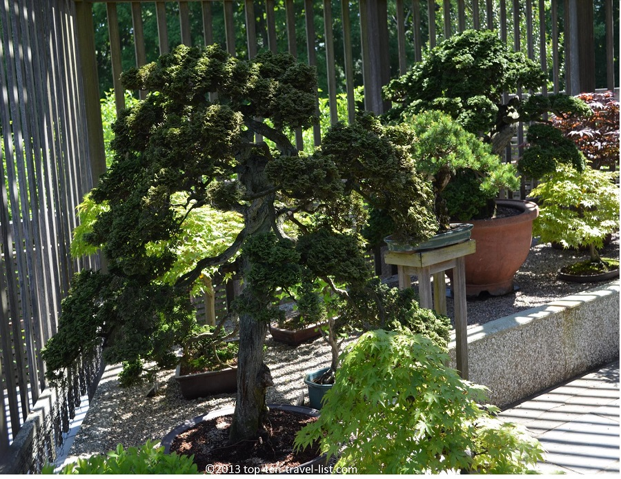The Arnold Arboretum Bonsai Collection - Jamaica Plains, MA