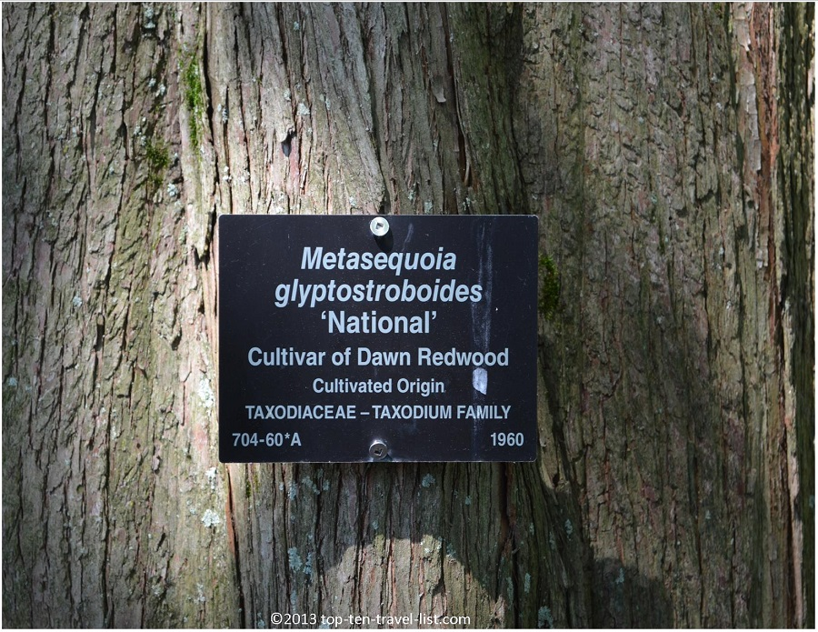 Arnold Arboretum Dawn Redwood sign