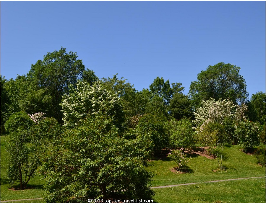 Beautiful trees at The Arnold Arboretum in Jamaica Plains, MA