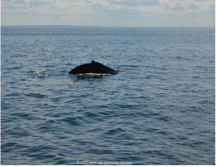 View of a humback whale's dorsal fin - Plymouth, MA