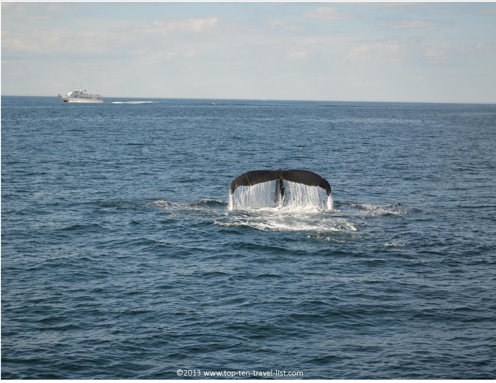 Whale watching in Plymouth, Massachusetts