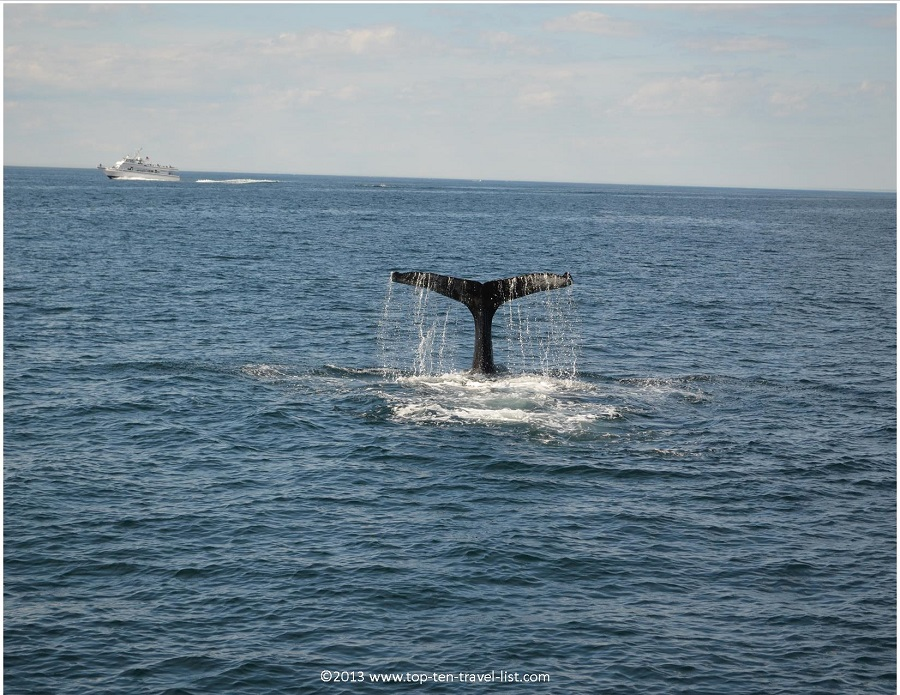 Humpback Whale Tail - Plymouth, MA whale watching trip
