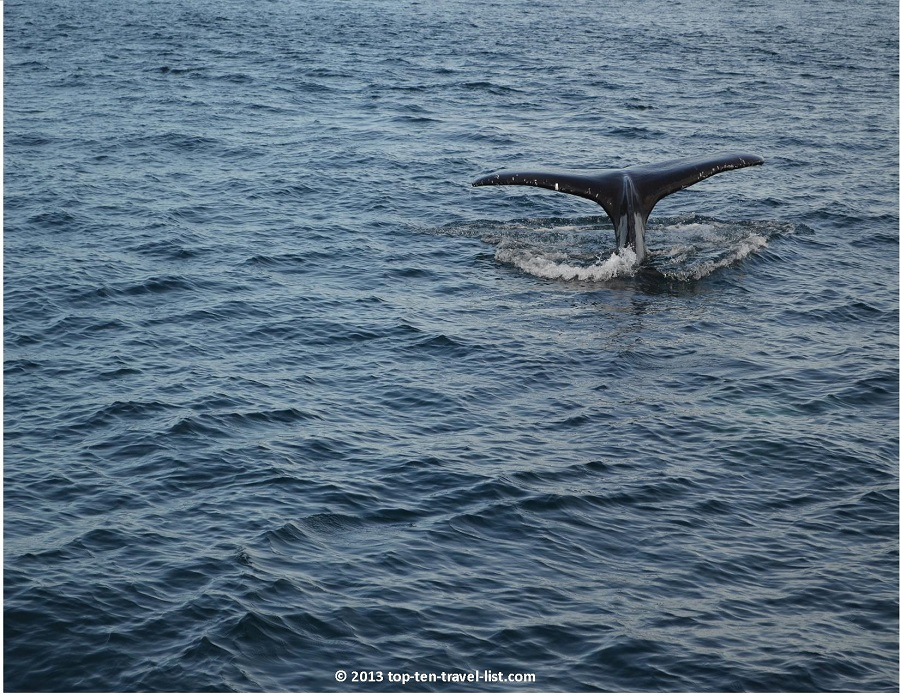 Humpback Whale Tail - Plymouth, MA