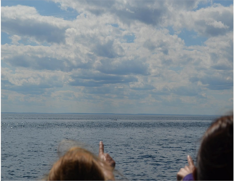 Spotting of a whale from afar