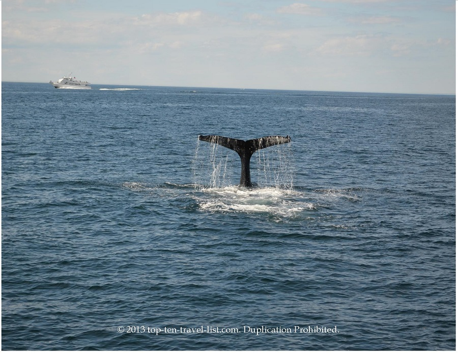 Whale Watching in Plymouth, MA