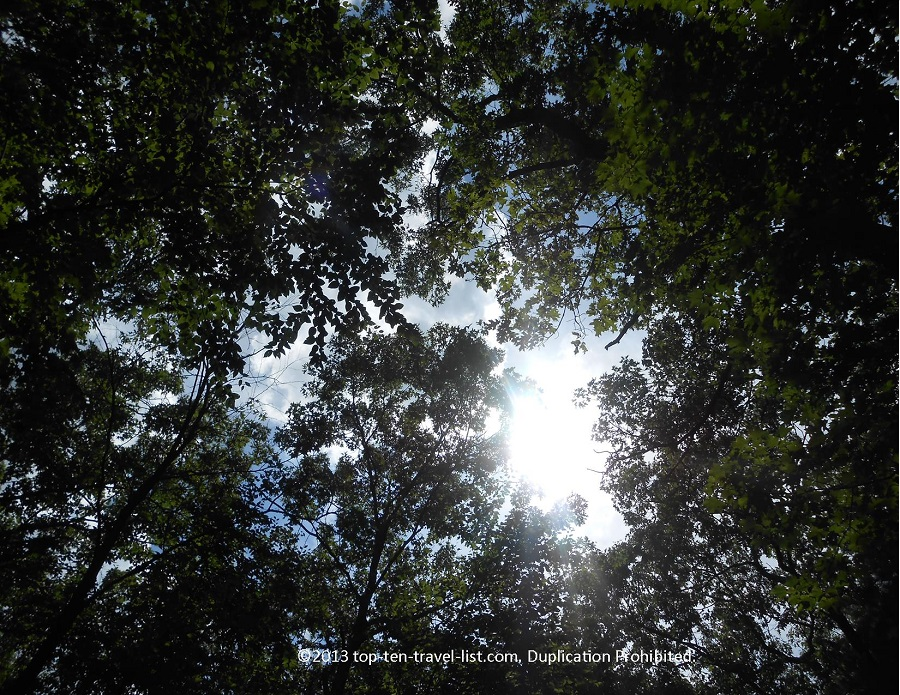 Sun cascading through the trees at Lincoln Woods State Park in Lincoln, Rhode Island