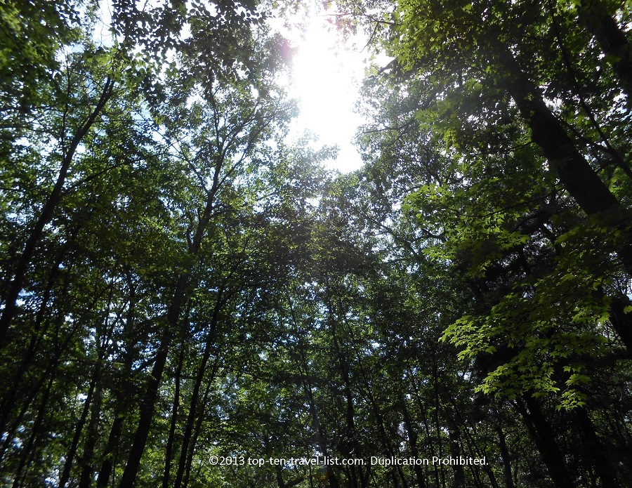 Sun glimmering through the trees at Lincoln Woods State Park in Lincoln, Rhode Island