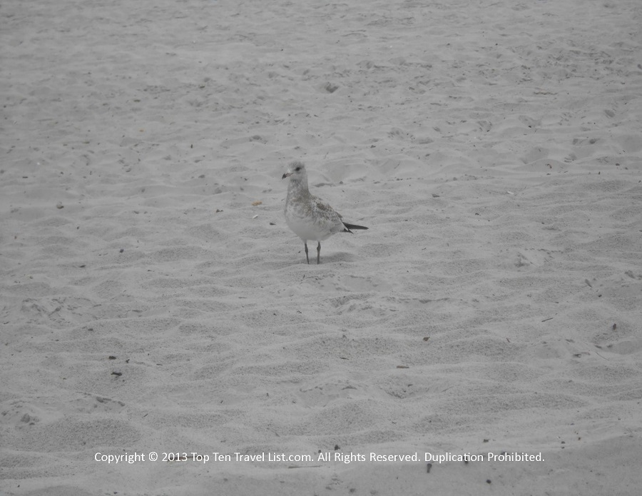 Bird at Rocky Neck State Beach in Niantic CT