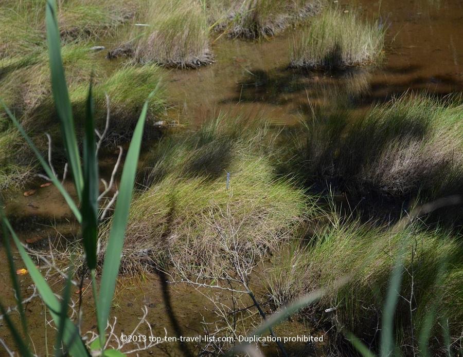 Dragonfly at Emilie Ruecker Wildlife Refuge