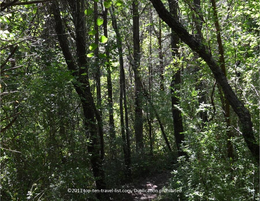 Blue trail wooded views - Emilie Ruecker - Tiverton, RI