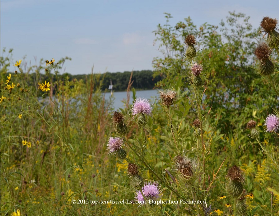 Scenic lake views at Little Red School House Nature Center