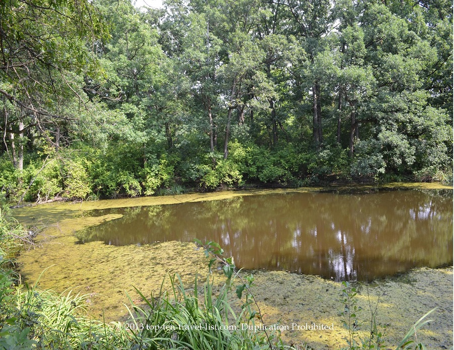 Pond views at Little Red School House's White Oak Trail