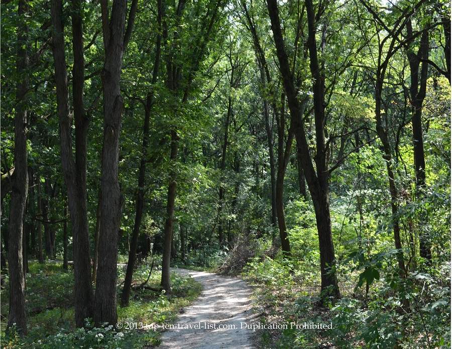Beautiful tall trees along the White Oak Trail at Little Red School House