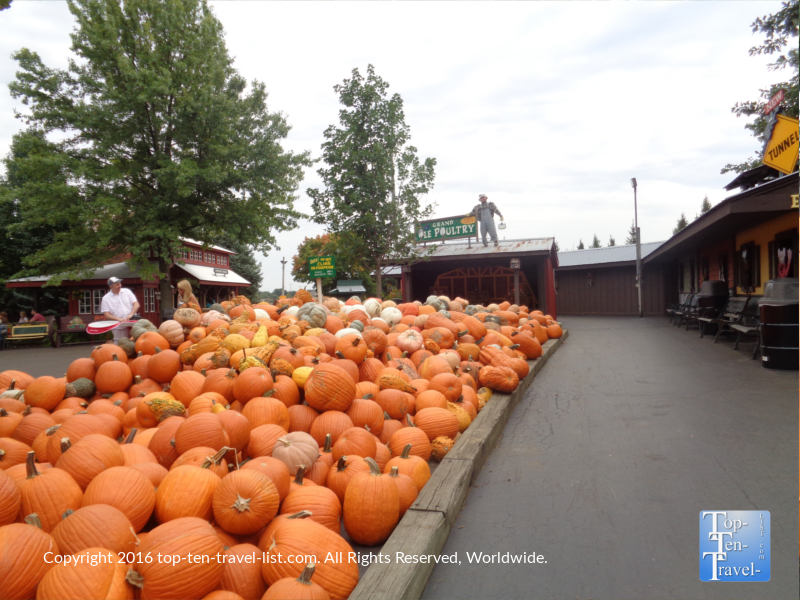 lots-of-pumpkins-at-bengstons-pumpkin-farm-in-homer-glen-il