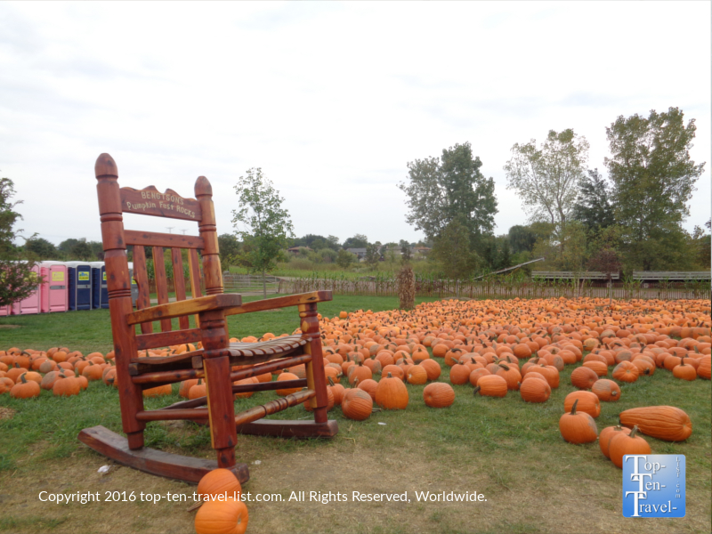 pumpkin-patch-at-bengstons-pumpkin-farm-in-homer-glen-il