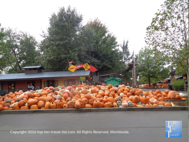 pumpkins-at-bengstons-pumpkin-farm-in-homer-glen-il