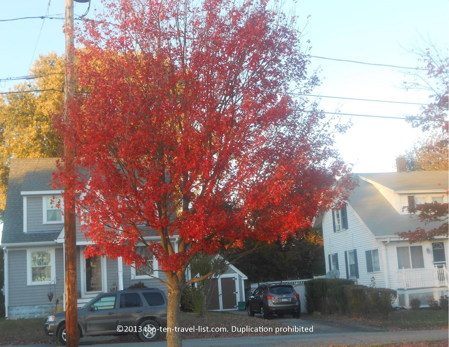 Beautiful red foliage in Swansea, Massachusetts