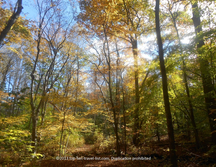 Bright foliage at Devil's Hopyard in East Haddam