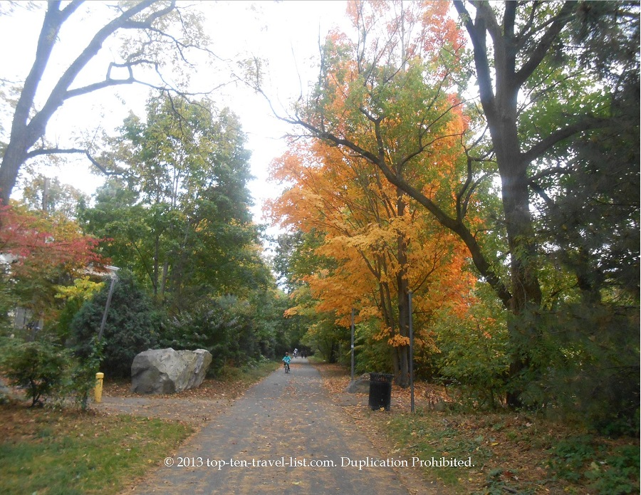 Bright orange tree along the Minuteman Bikeway in Massachusetts
