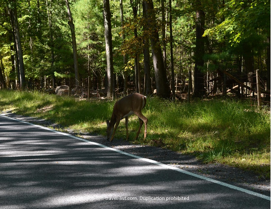 Deer on road - upstate NY