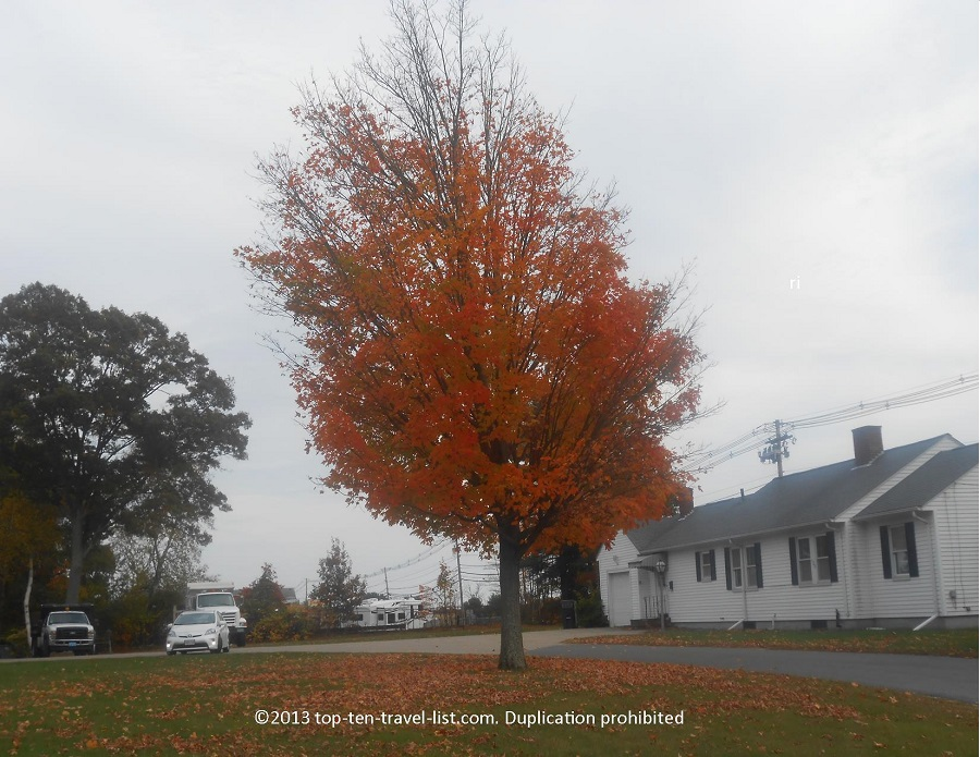 Great orange foliage in Raynham, Massachusetts