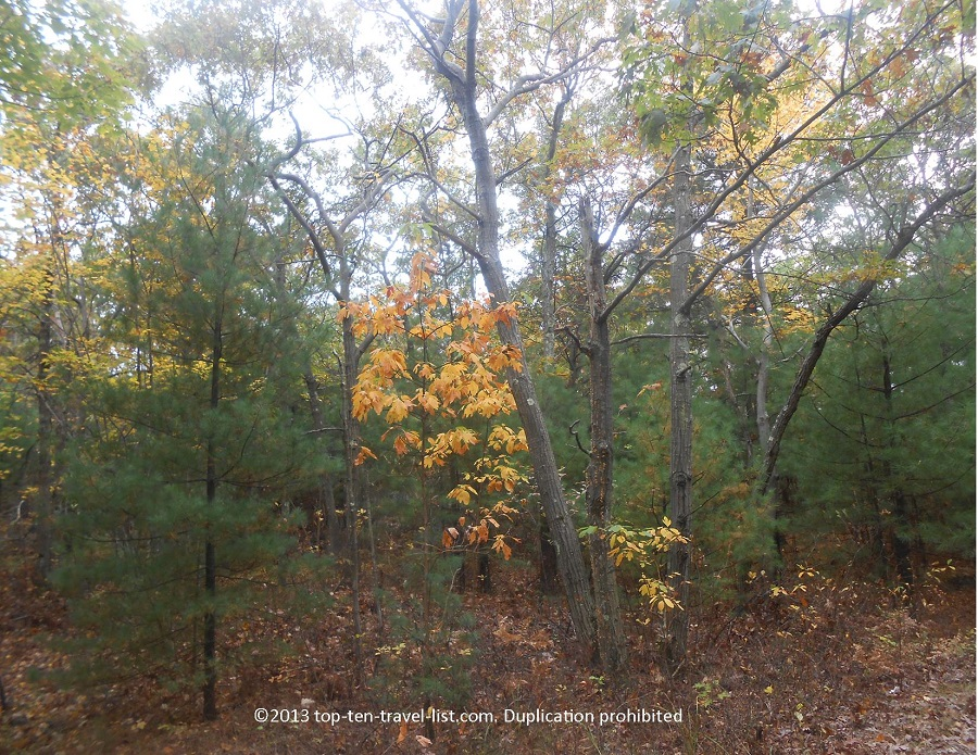 Yellow foliage at Blue Hills Reservation in Boston
