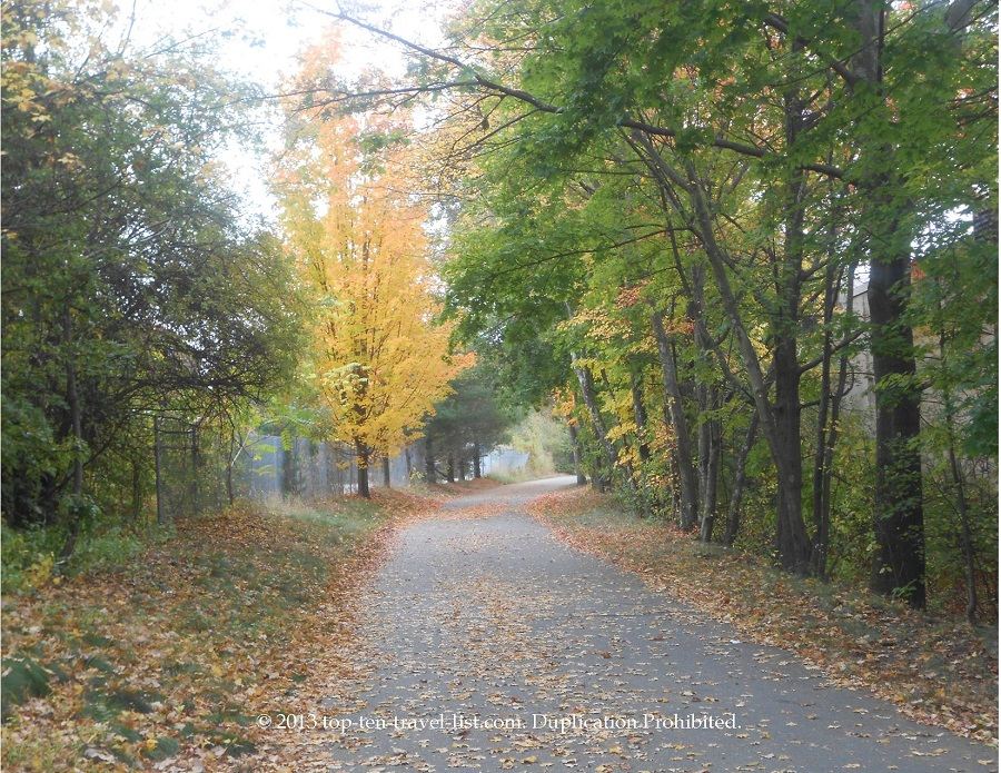 Bright yellow foliage along the Minuteman Bikeway