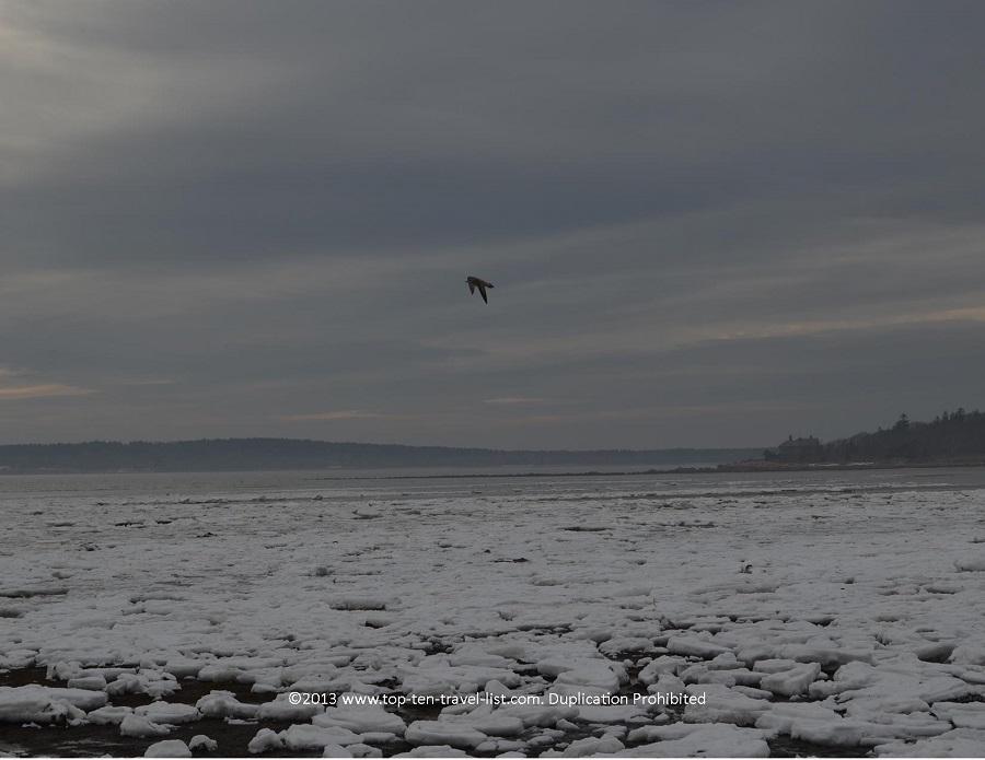 Bird at Little Harbor Beach in Wareham, MA