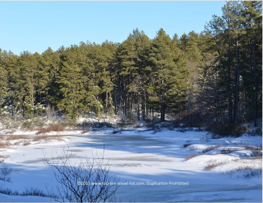 Icy pond views at Myles Standish State Forest