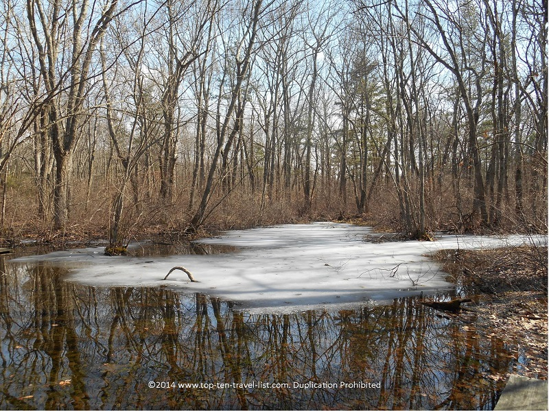 Water reflection at Caratunk Wildlife Refuge - Seekonk, MA