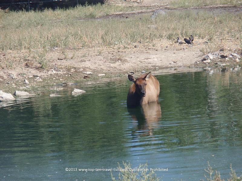 Idaho's Pocatello Zoo