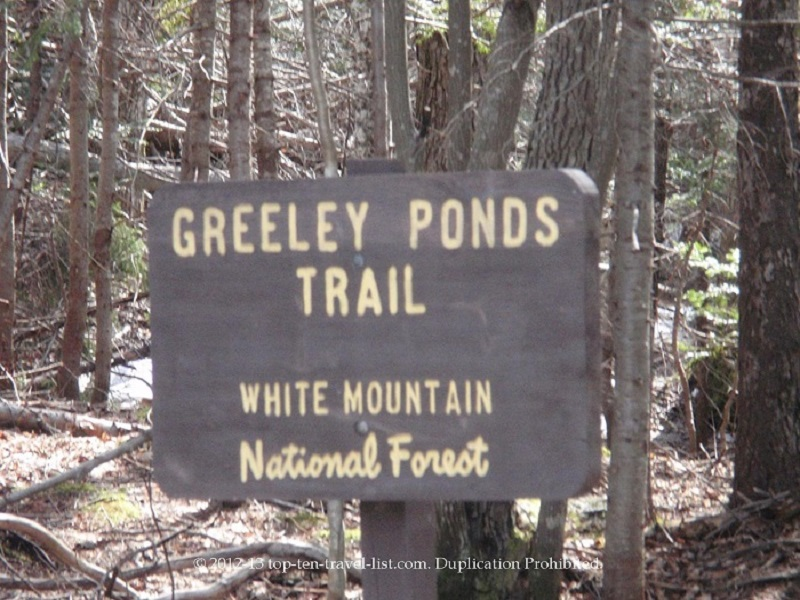 Greeley Ponds trail in White Mountains National Forest