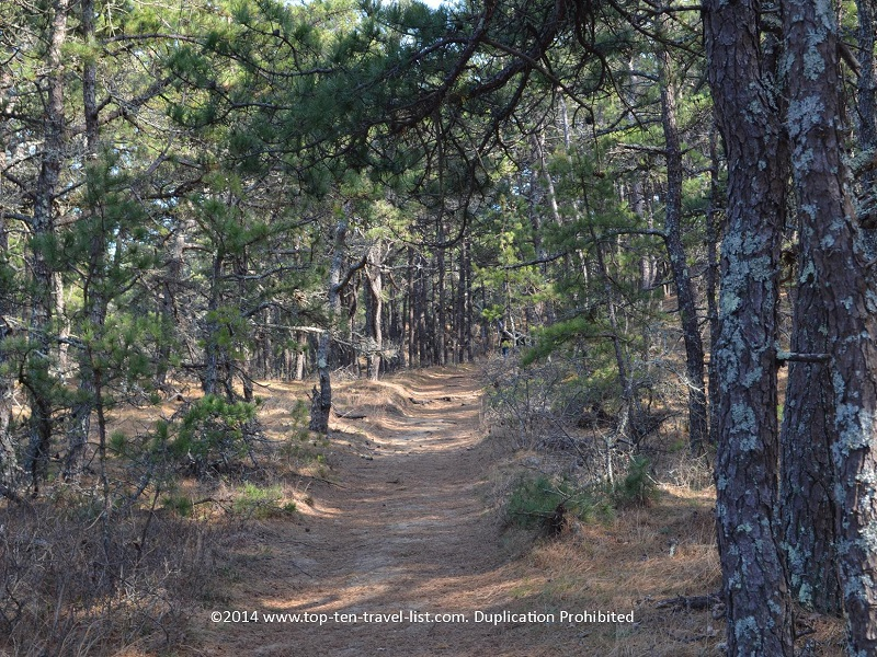 Scenic forested secton through Cape Cod's Great Island Trail