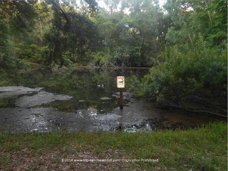 Alligator warning sign at John Chestnut Park - Palm Harbor, Florida