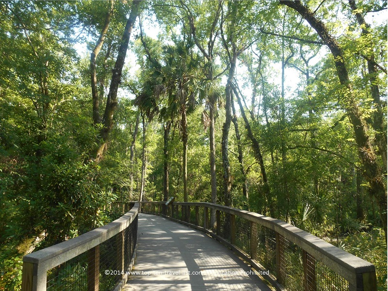 Boardwalk on the Ed Center Trail Loop- Brooker Creek Preserve in Tarpon Springs, Florida