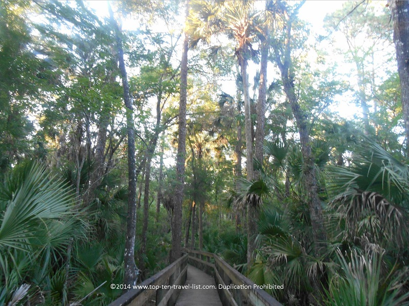 Pretty trees along the boardwalk at John Chestnut Park in Palm Harbor, Florida