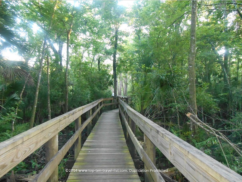 Lush trees along the boardwalk at John Chestnut Park in Palm Harbor, Florida