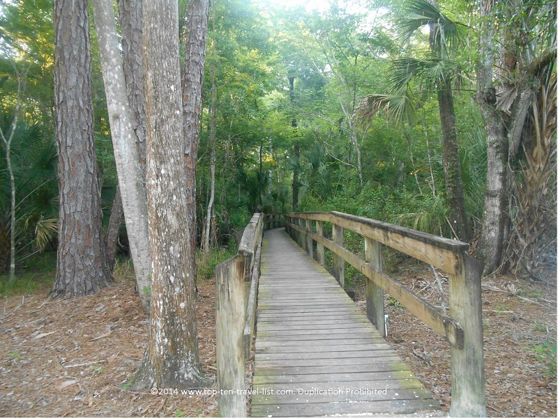 Views along the John Chestnut Park boardwalk in Palm Harbor, Florida
